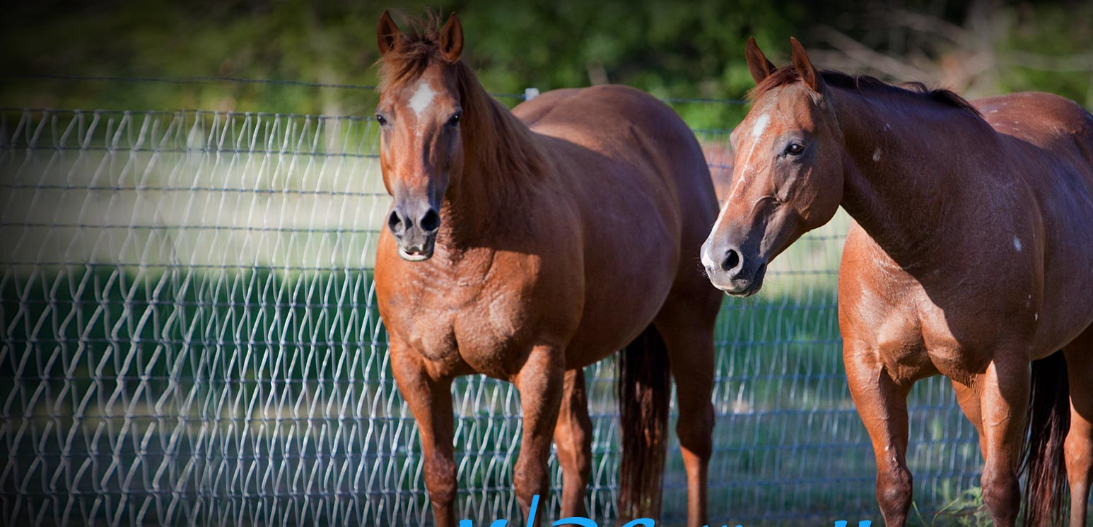 M/R Cutting Horses - Mare Power